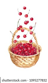 watercolor basket with cherry, painting berry