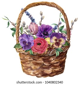 Watercolor basket with flowers. Hand painted tulip, pansies, anemone, ranunculus, willow, lavender and tree branch with leaves isolated on white background. For design, print or background