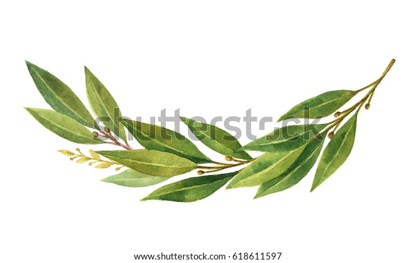Watercolor Bay leaf wreath isolated on white background. Hand drawn illustration for sports achievements, invitations, awards, victories and success..