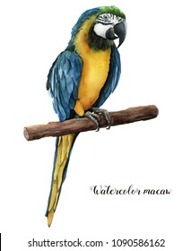 Watercolor beautiful parrot. Hand painted blue-and-yellow parrot isolated on white background. Nature illustration with bird. For design, print or background