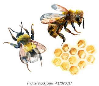 Watercolor bee, bumble bee and honeycomb set. Honey collection for label, template design. Hand painted illustration