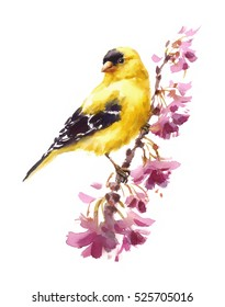 Watercolor Bird American Goldfinch Sitting on the Flower Branch Hand Painted Floral Greeting Card Illustration