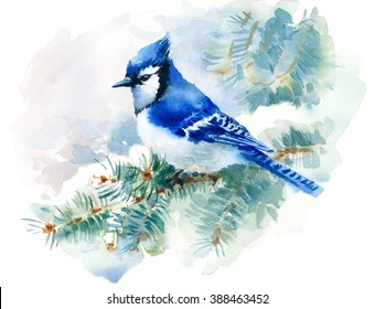 Watercolor Bird Blue Jay Winter Christmas Hand Painted Greeting Card Illustration