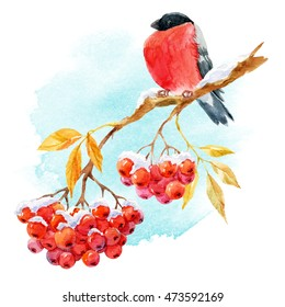 watercolor bird bullfinch on the branch of mountain ash, red berries of mountain ash under snow, winter print, autumn illustration