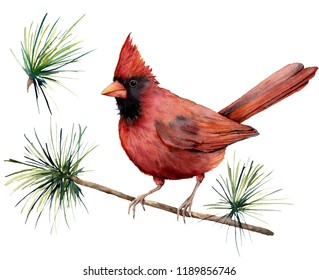 Watercolor bird cardinal. Hand painted greeting card illustration with red bird and branch isolated on white background. For design, print or background