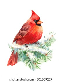 Watercolor Bird Cardinal Winter Christmas Hand Painted Greeting Card Illustration Isolated on white background