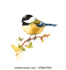 Watercolor Bird Chickadee Tit On The Branch Hand Drawn Illustration isolated on white background