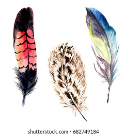 Watercolor bird feather from wing isolated. Aquarelle wild flower for background, texture, wrapper pattern, frame or border.