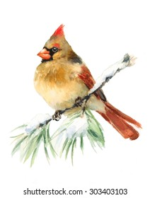 Watercolor Bird Female Cardinal Winter Christmas Hand Painted Greeting Card Illustration