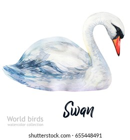 Watercolor bird of isolated illustration on a white background. Natural wildlife collection. Swan.