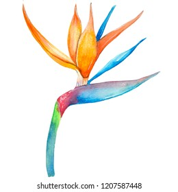 Watercolor bird of paradise plant, hand-drawn tropical flower,  postcard, poster