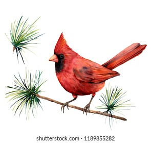 Watercolor bird red cardinal. Hand painted greeting card illustration with bird and branch isolated on white background. For design, print or background