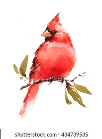 Watercolor Bird Red Cardinal Hand Painted Illustration isolated on white background