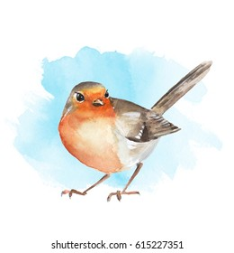Watercolor bird Robin. Colorful illustration. Blue background