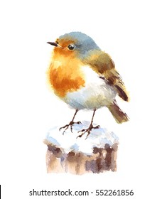Watercolor Bird Robin Hand Drawn Winter Illustration isolated on white background