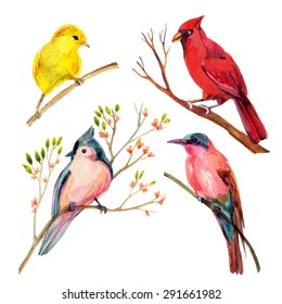 Watercolor bird set: red northern cardinal, tufted titmouse, yellow warbler and bee-eater. Hand painted illustrations isolated on white background