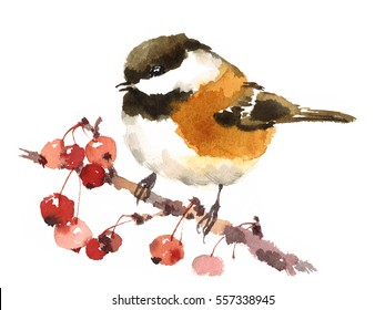 Watercolor Bird Tit Chickadee On The Branch With Berries Hand Painted Illustration Isolated on white background