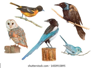 Watercolor birds isolated on white background. Raven, magpie, owl, blue bird, oriole.