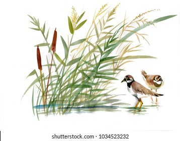 Watercolor birds near the reeds with leaves closeup isolated on white background. Hand painting