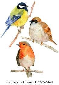 Watercolor birds set - tit, sparrow and robin. Hand painted illustration isolated on white background.