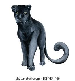 Watercolor black panther Wiledlife hand drawn illustration