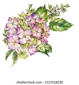 Watercolor blooming hydrangea, leaves, buds. Natural botanical floral collection isolated on white background, Summer Flowers
