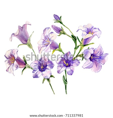 Watercolor blue bells flowers on white stock illustration 711337981 watercolor blue bells flowers on a white background mightylinksfo