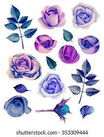 Watercolor blue roses clip art. Purple flowers isolated