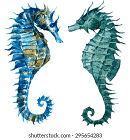 watercolor blue seahorse, isolated object, marine life
