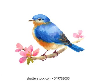 Watercolor Bluebird On Cherry Blossoms Branch Hand Painted Illustration isolated on white background