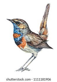 Watercolor Bluethroat Bird. Vintage style. Hand drawn watercolor illustration