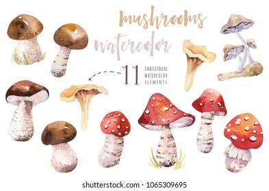 Watercolor bohemian forest mushrooms set, woodland isolated poster amanita illustration, fly agaric, boletus, orange-cap boletus mushroom decoration.