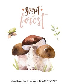 Watercolor bohemian forest mushrooms set, woodland isolated poster amanita illustration, fly agaric, boletus, orange-cap boletus mushroom decoration.