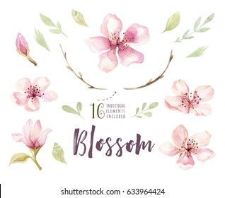 Watercolor boho blossom flower set. Spring or summer decoration floral bohemian design. Watercolour isolated. foliage illustration with cherry, green leaf, feather. Botanical aquarelle.