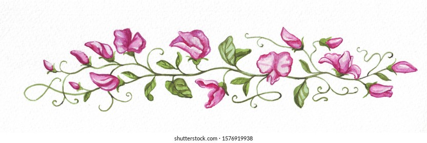 Watercolor border of blooming peas on a white background