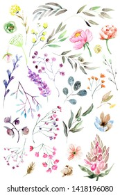 Watercolor botanic set of plants. Hand drawn floral illustration on a white background.