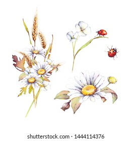 Watercolor botanical bouquets with flowers camomiles, wheats and red ladybirds isolated on white background. lt's perfect for cards, invitations, wedding design, pattern design