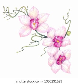 Watercolor botanical decorative illustration of a blossoming branch of an orchid with three flowers.