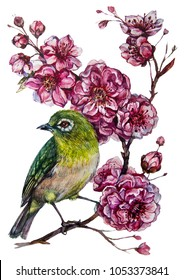 Watercolor Botanical Illustration of Japanese White-Eye Bird on Sakura Branch Isolated on White. Small Bird with Green Feathers on the Blooming Cherry Tree with Pink Flowers. Chinoiserie Style Decor