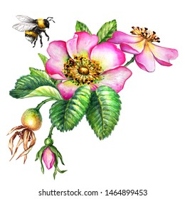 watercolor botanical illustration, pink dog rose flowers, flying bumblebee, rosehip arrangement clip art, isolated bouquet on white background