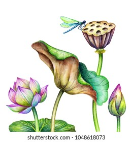 watercolor botanical illustration, pink lotus flowers, oriental garden nature, water lillies, green leaves, chinoiserie wallpaper, lotos, tropical floral clip art isolated on white background