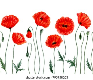Watercolor botanical illustration – red poppy flowers. Seamless border with poppy flowers. Poppy flower remembrance day symbol. Anzac day. Isolated on white background.
