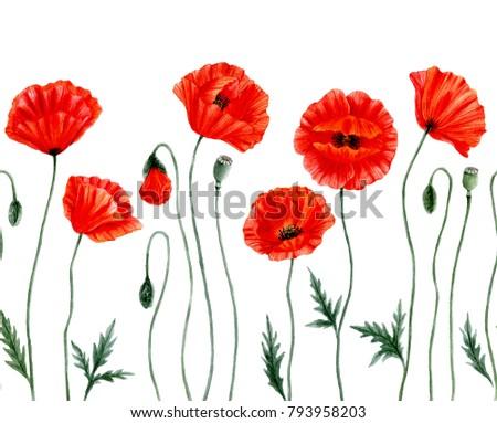 Watercolor botanical illustration red poppy flowers stock watercolor botanical illustration red poppy flowers seamless border with poppy flowers poppy flower mightylinksfo