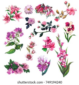 watercolor botanical illustrations of decorative garden summer flowers in a pink color scheme
