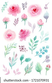 Watercolor botanical illustrations. Pink roses and mint leaves. Floral Design elements. Perfect for wedding invitations, greeting cards, posters, prints