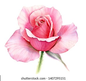 watercolor botanical painting pink rose and green leaf with soft petals wet in wet floral isolated element blurred realistic flowers on white background print ready artwork