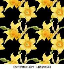 Watercolor botanical realistic floral pattern with narcissus. Bright yellow daffodil on a black background, path included