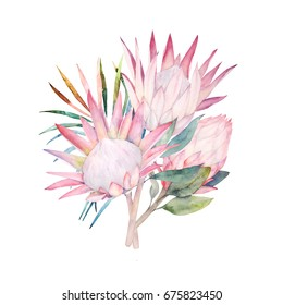 Watercolor bouquet. Protea flowers and tropical leaves. Hand drawn illustration