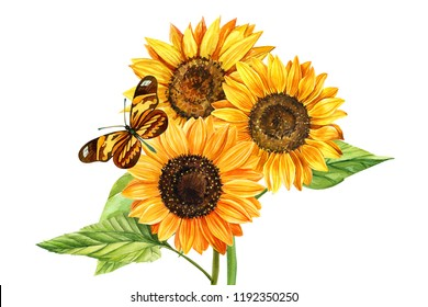 Watercolor bouquet of sunflowers and butterfly, hand drawn floral illustration isolated on white background. Perfect for wedding,invitation,template card.
