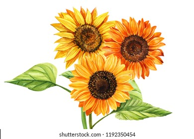Watercolor bouquet of sunflowers, hand drawn floral illustration isolated on white background. Perfect for wedding,invitation,template card.